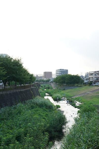 003_DSC00684.JPG