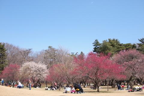 008_P3230522_e-p1_25mm_梅_野川公園_20140323.jpg