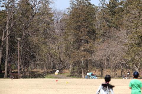 012_P3232096_e-620_50-200mm_竜巻_野川公園_20140323.jpg
