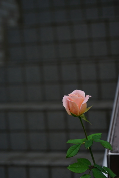 013_DSC05783.JPG