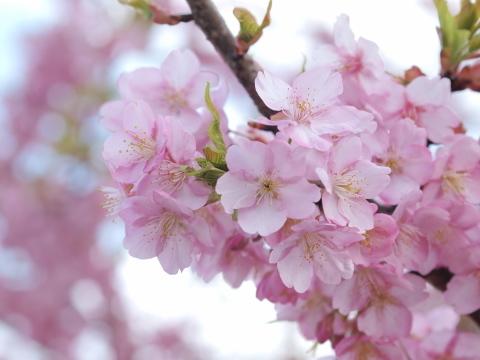 014_9407_ep1_om35-80_桜_20120401.jpg