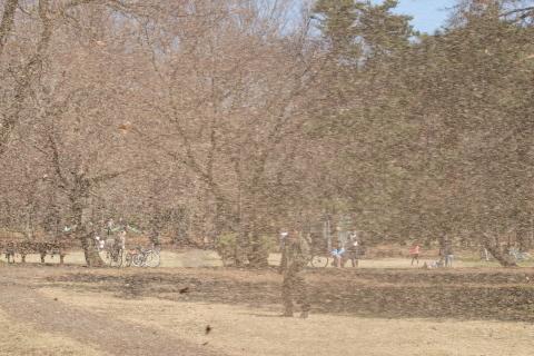 014_P3232098_e-620_50-200mm_竜巻_野川公園_20140323.jpg