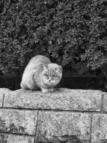 014_s_8218-mono_ep1_14-42_猫_chofu.jpg