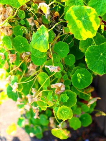 20100224_P2243534_EP1_植物_chofu.JPG