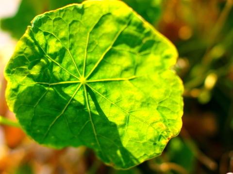 20100224_P2243535_EP1_植物_chofu.JPG