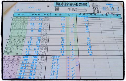 わんにゃんドッグ-2_maria_20111203.jpg