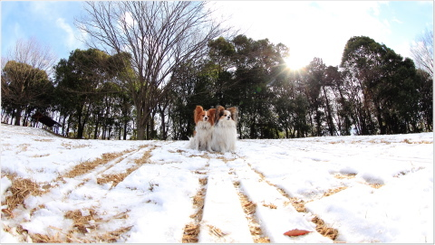 IMG_4151-2_60d_marililiと雪の広場_富士見台公園_南大沢_20120218.JPG