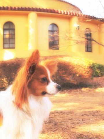 a005_saf_7971-t_lilia_桜ヶ丘公園_tama.jpg