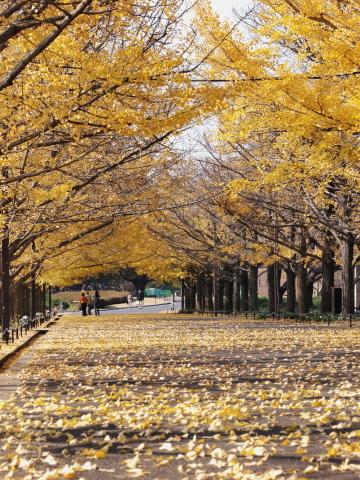 003_s_9251_ep1_50-200swd_黄葉_昭和記念公園_20111130.jpg