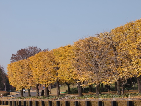 004_s_9241_ep1_50-200swd_黄葉_昭和記念公園_20111130.jpg