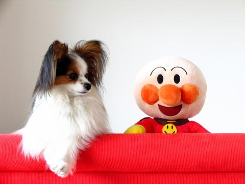 012_アンパンマンと封印がとかれたソファの上に乗る犬マリア_IMG_0776_20100703.JPG