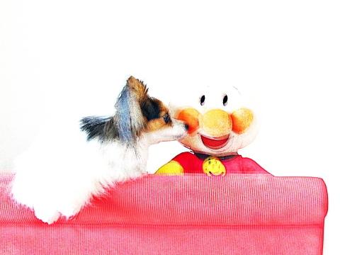 013_アンパンマンと封印がとかれたソファ上に乗る犬マリア_IMG_0774_20100703.JPG