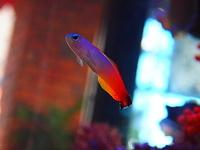 091103_PB031486_L-WAVE_高価な魚.JPG