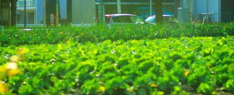 20100228_P2283602_EP1_畑と街.JPG