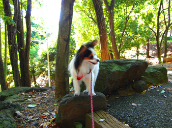UP_090920_P9200690_稲城中央公園_marilili.JPG
